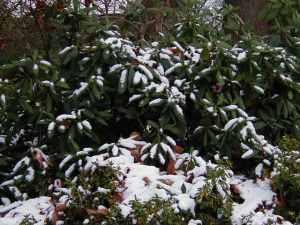 snowyrhody1